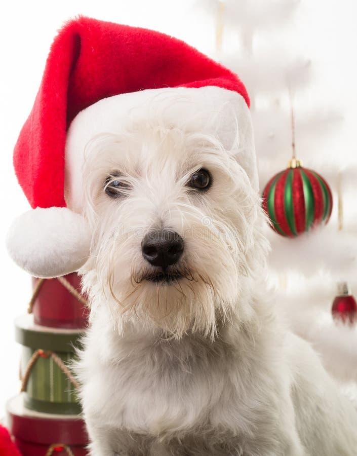 Άσπρο σκυλί κουταβιών Χριστουγέννων στοκ φωτογραφία με δικαίωμα ελεύθερης χρήσης
