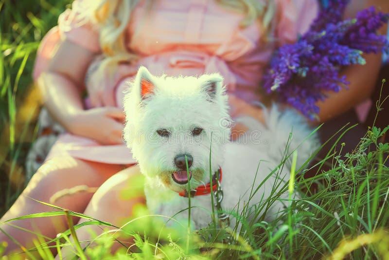Άσπρο σκυλί Νέο όμορφο έγκυο ζεύγος στο floral τομέα, με μια ανθοδέσμη των πορφυρών λουλουδιών κλείστε επάνω έγκυος γυναίκα με το στοκ εικόνες
