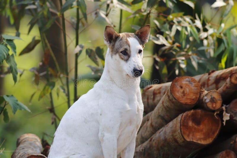 Άσπρο σκυλί οδών στοκ εικόνα με δικαίωμα ελεύθερης χρήσης