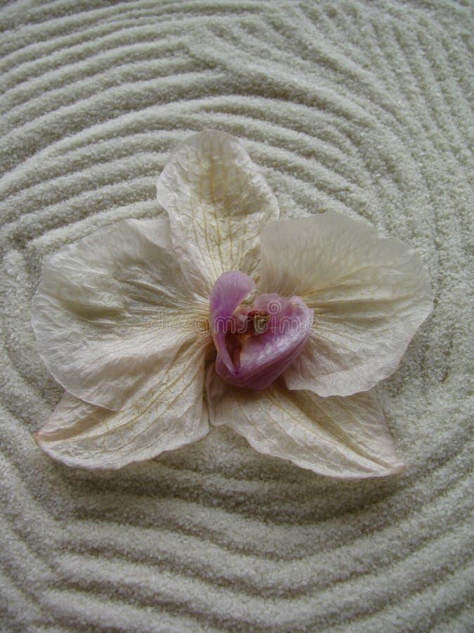 Άσπρο σχέδιο και λουλούδι άμμου, που συμβολίζουν την πνευματικότητα, ηρεμία στοκ φωτογραφία με δικαίωμα ελεύθερης χρήσης