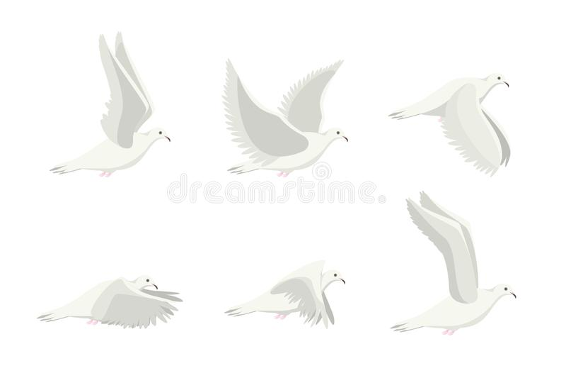 Άσπρο σύνολο πουλιών περιστεριών κινούμενων σχεδίων διάνυσμα απεικόνιση αποθεμάτων