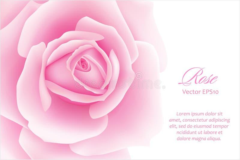 Άσπρο υπόβαθρο με ένα ρόδινο ροδαλό λουλούδι επίσης corel σύρετε το διάνυσμα απεικόνισης ελεύθερη απεικόνιση δικαιώματος