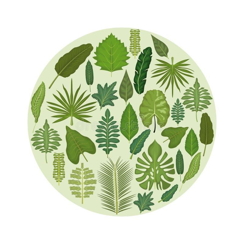 Άσπρο υπόβαθρο με το κυκλικό πλαίσιο με τα διακοσμητικά πράσινα φύλλα μέσα απεικόνιση αποθεμάτων