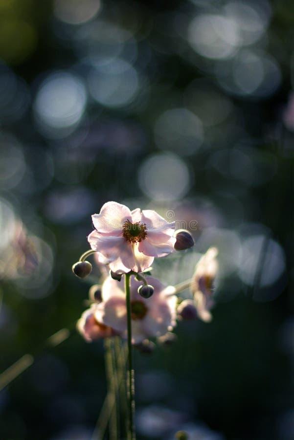 Άσπρο υπόβαθρο τομέων θερινών χωρών λουλουδιών στοκ φωτογραφίες