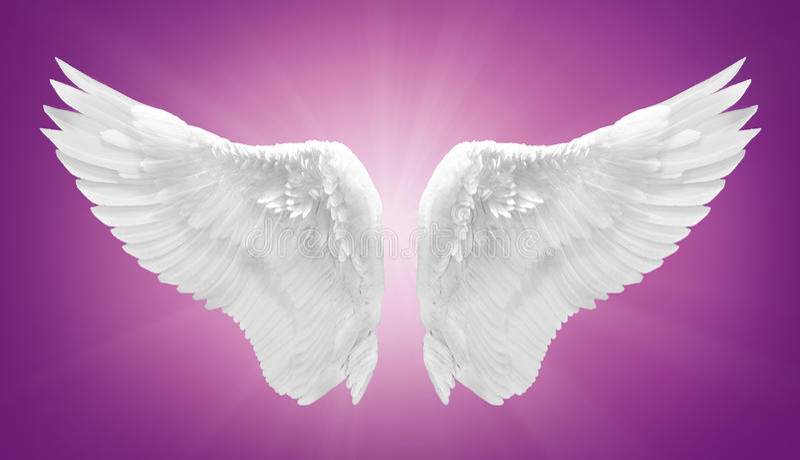 Άσπρο φτερό αγγέλου που απομονώνεται στοκ φωτογραφίες με δικαίωμα ελεύθερης χρήσης