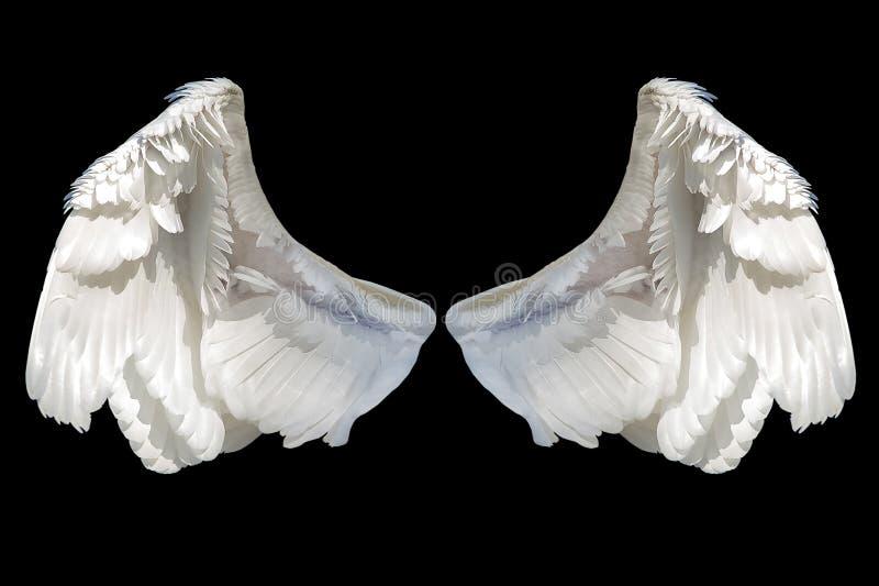 Άσπρο φτερό αγγέλου στοκ φωτογραφία