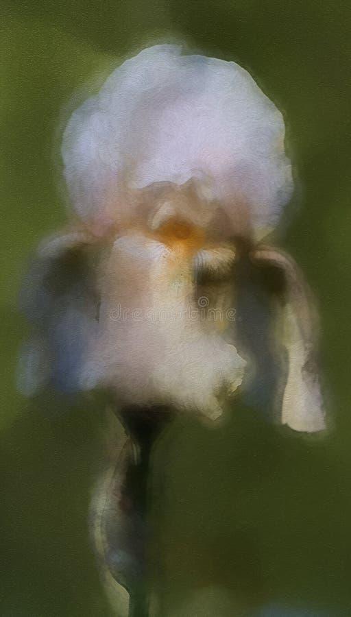 Άσπρο χρυσό και ελαφρύ άνθος της Iris μαυρίσματος ψηλό γενειοφόρο στοκ φωτογραφία με δικαίωμα ελεύθερης χρήσης