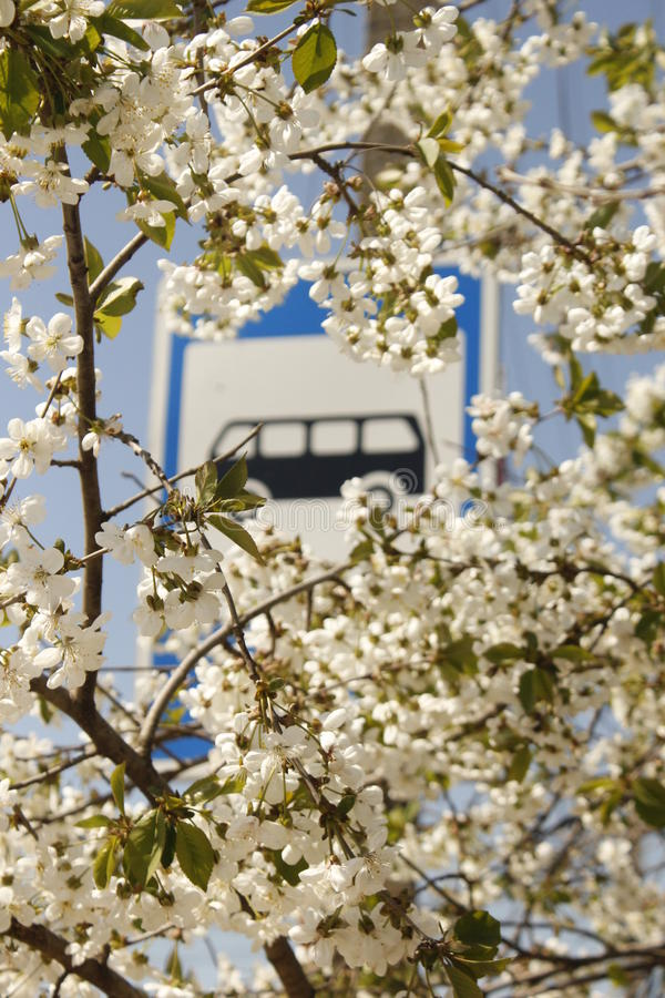 Άσπρο χωριό κήπων λουλουδιών στάσεων Buss στοκ εικόνες
