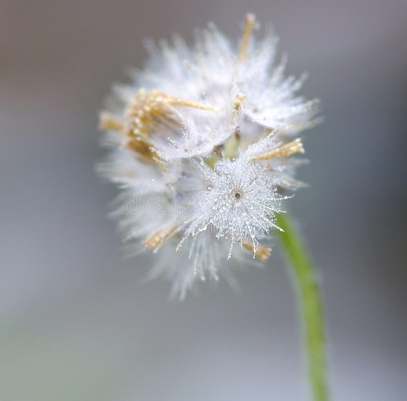 Άσπρο greennature δροσιάς φύσης λουλουδιών στοκ εικόνες