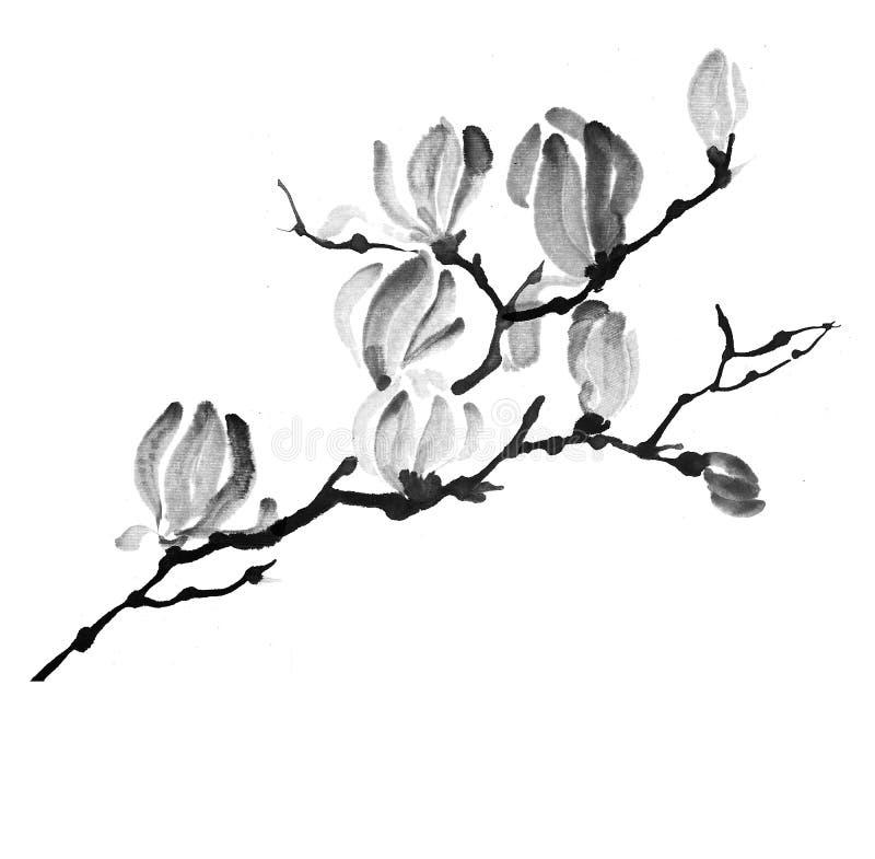 Άσπρο magnolia διανυσματική απεικόνιση