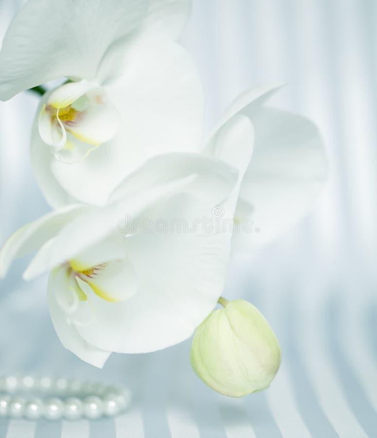 Άσπρο orchid στοκ εικόνα με δικαίωμα ελεύθερης χρήσης