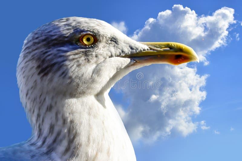 Άσπρο seagull που κοιτάζουν προς τα εμπρός και μπλε ουρανός στοκ εικόνα