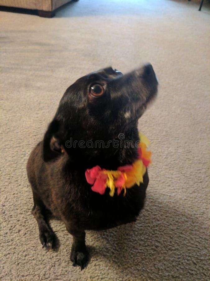 Άσσος το κουτάβι λουλουδιών στοκ φωτογραφίες με δικαίωμα ελεύθερης χρήσης