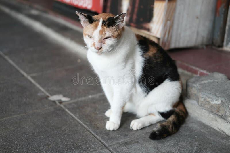 Άστεγη γάτα που βρίσκεται στο σκυρόδεμα στοκ εικόνα