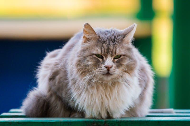 Άστεγη γκρίζα γάτα με ένα λυπημένο βλέμμα σε μια οδό πόλεων στοκ φωτογραφίες