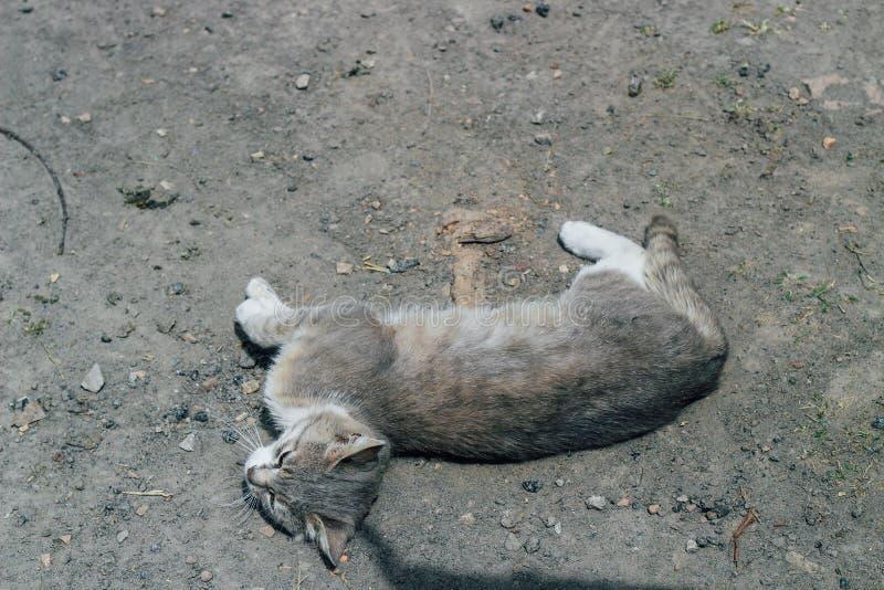 Άστεγη γκρίζα γάτα που βρίσκεται στο έδαφος Φωτογραφία μιας γάτας πλησίον στοκ φωτογραφίες με δικαίωμα ελεύθερης χρήσης
