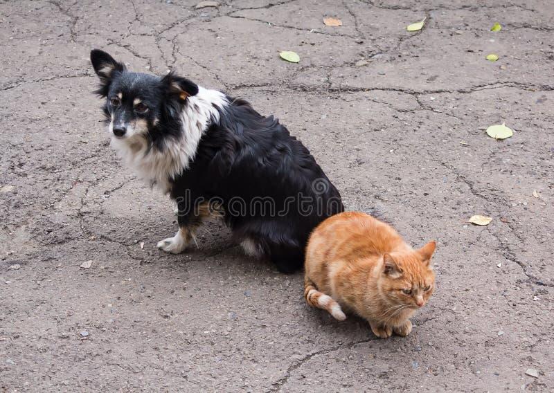 Άστεγοι σύντροφοι, γάτα και σκυλί στοκ εικόνες