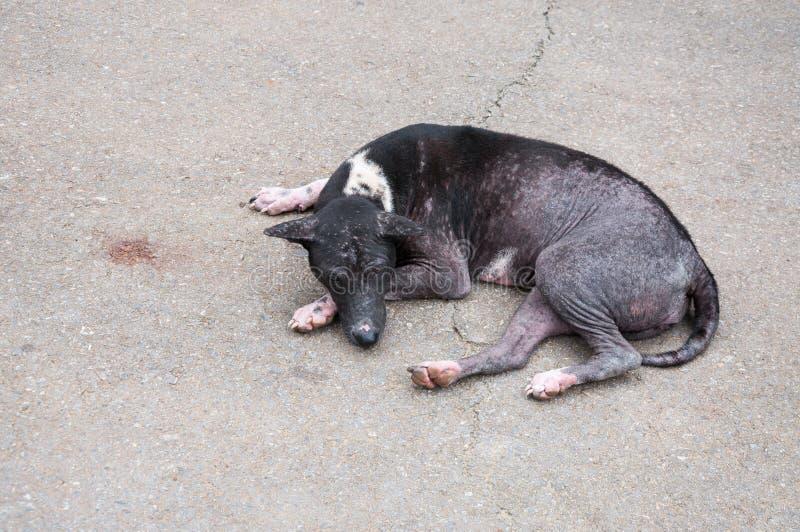 Άστεγο μαύρο περιπλανώμενο σκυλί στο δρόμο οδών στην Ασία στοκ εικόνα