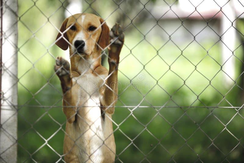 Άσυλο για τα σκυλιά στοκ φωτογραφία