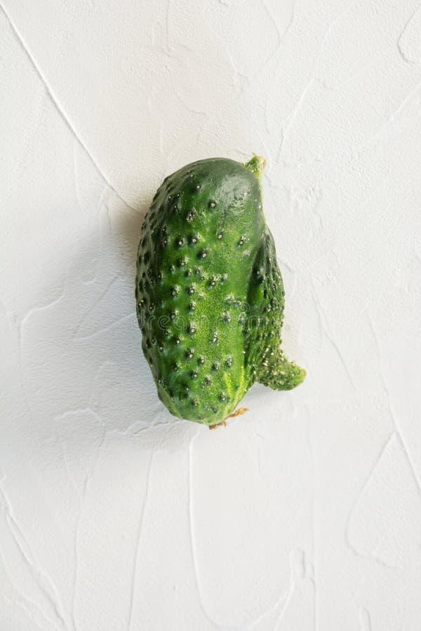 Άσχημος αγγούρι Οργανικά λαχανικά έννοιας o στοκ φωτογραφία με δικαίωμα ελεύθερης χρήσης