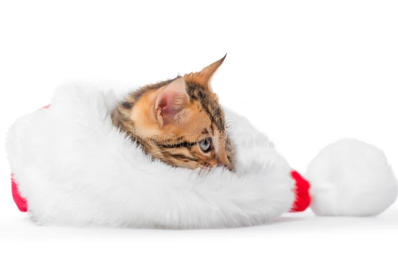 Άτακτη συνεδρίαση γατακιών σε ένα καπέλο Χριστουγέννων σε ένα λευκό στοκ φωτογραφία