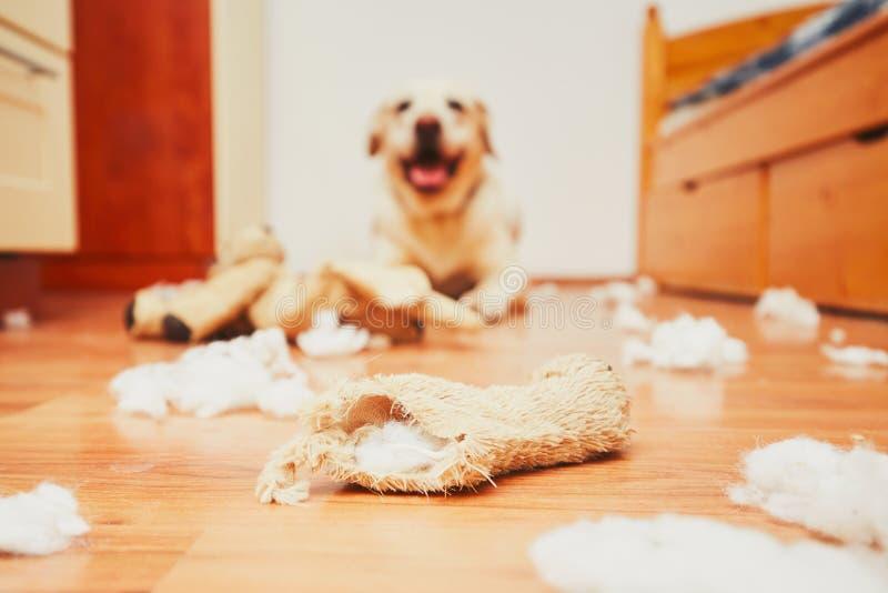 Άτακτο σπίτι σκυλιών μόνο στοκ φωτογραφία με δικαίωμα ελεύθερης χρήσης