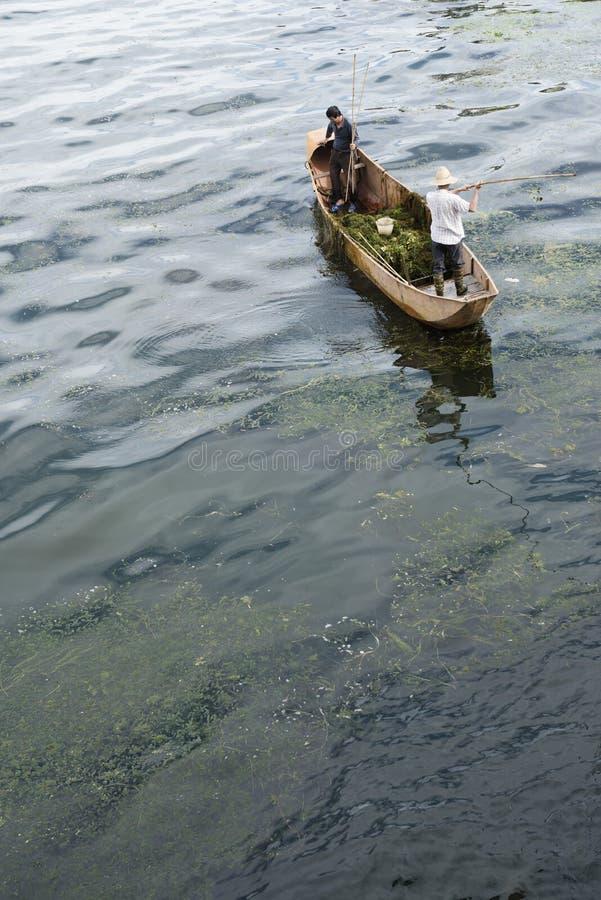 Άτομα που καθαρίζουν τα ζιζάνια νερού στοκ εικόνες