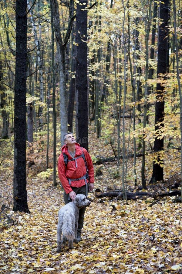 Άτομο και σκυλί στο πεζοπορώ πτώσης στο δάσος στοκ φωτογραφία