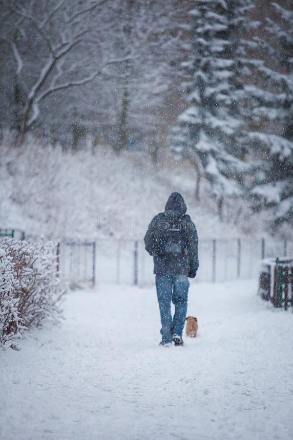 Άτομο και σκυλί στο χιόνι στοκ φωτογραφία με δικαίωμα ελεύθερης χρήσης