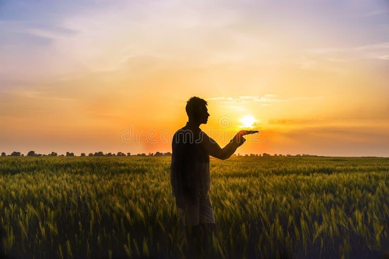 Άτομο μεταξύ του τομέα με τα αυτιά του σίτου και του ήλιου σε ετοιμότητα του στοκ εικόνες