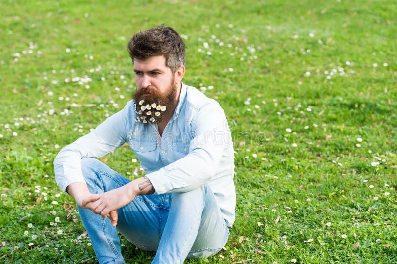Άτομο με την ήρεμη χαλάρωση προσώπου στο χλοώδη τομέα με τα άγρια λουλούδια Όμορφος τύπος με τη μαργαρίτα ή chamomile λουλούδια σ στοκ εικόνα με δικαίωμα ελεύθερης χρήσης