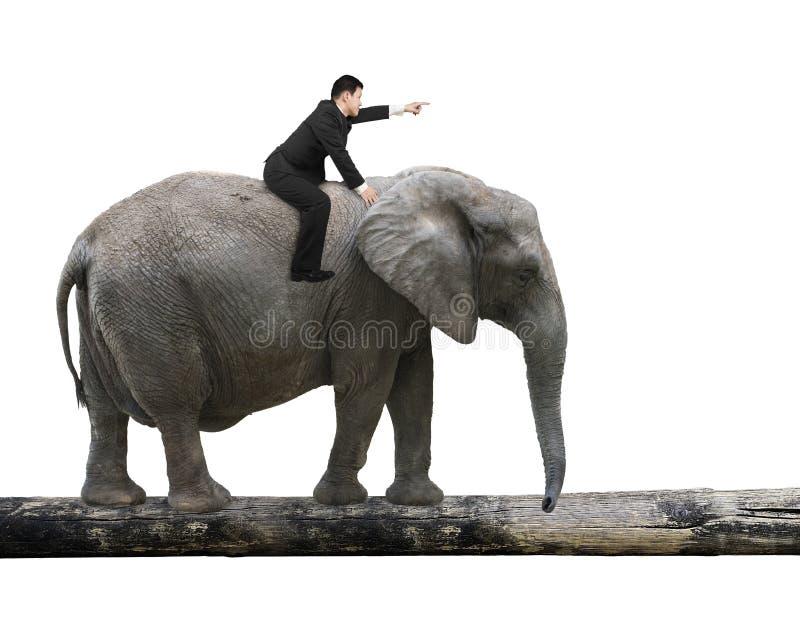Άτομο με την υπόδειξη του ελέφαντα οδήγησης δάχτυλων που περπατά στον κορμό δέντρων στοκ εικόνες με δικαίωμα ελεύθερης χρήσης