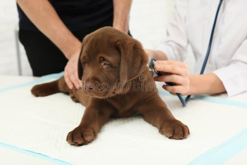 Άτομο με τον επισκεπτόμενο κτηνίατρο κατοικίδιων ζώων του στην κλινική στοκ φωτογραφία με δικαίωμα ελεύθερης χρήσης