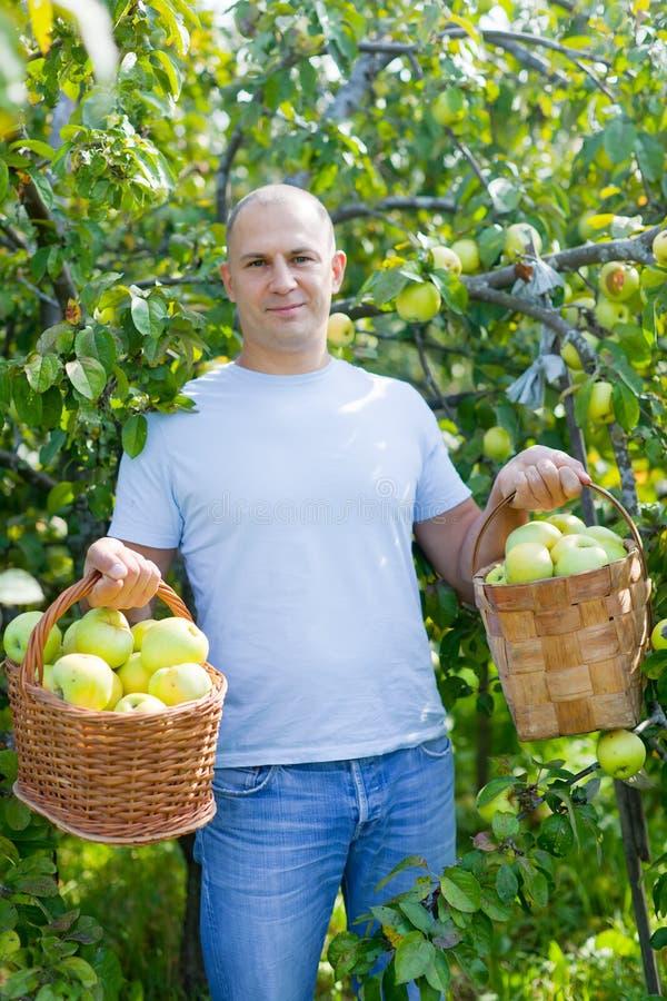Άτομο με το καλάθι των συγκομισμένων μήλων στοκ εικόνα