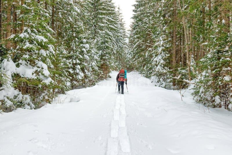 Άτομο με το σακίδιο πλάτης που πηγαίνει στο χειμερινό δάσος στοκ εικόνες