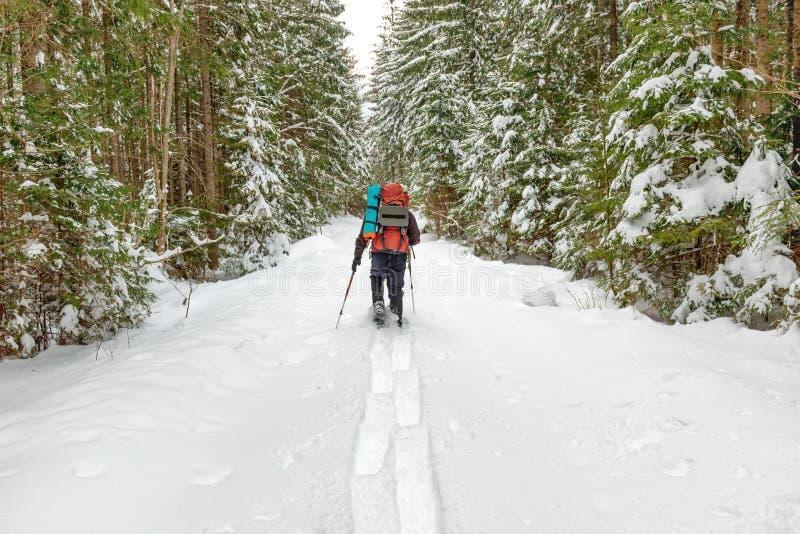 Άτομο με το σακίδιο πλάτης που πηγαίνει στο χειμερινό δάσος στοκ εικόνα με δικαίωμα ελεύθερης χρήσης