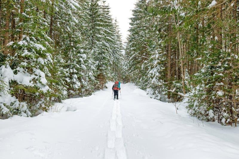 Άτομο με το σακίδιο πλάτης που πηγαίνει στο χειμερινό δάσος στοκ φωτογραφίες με δικαίωμα ελεύθερης χρήσης