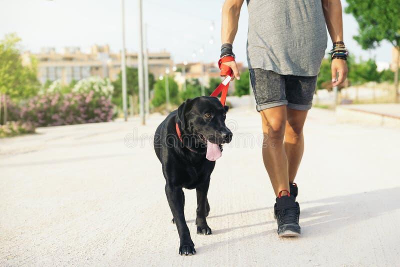 Άτομο που έχει τη διασκέδαση με το σκυλί του στοκ φωτογραφία με δικαίωμα ελεύθερης χρήσης
