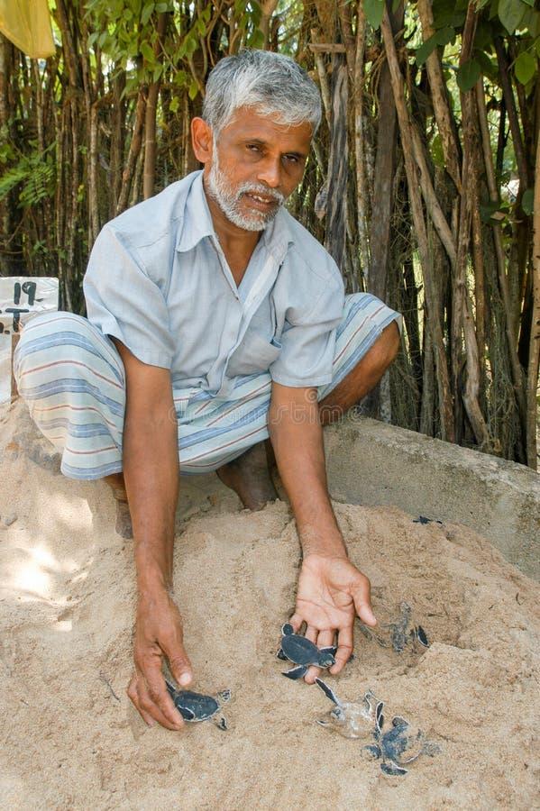 Άτομο που θεραπεύει τις χελώνες μωρών στο αγρόκτημα αναπαραγωγής χελωνών στοκ φωτογραφία