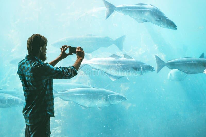 Άτομο που παίρνει τη φωτογραφία που χρησιμοποιεί το smartphone των ψαριών στο μεγάλο ενυδρείο στοκ εικόνα με δικαίωμα ελεύθερης χρήσης