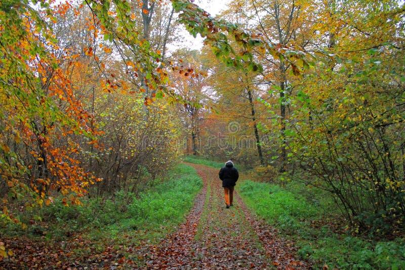 Άτομο που περπατά μόνο στο δάσος φθινοπώρου στοκ εικόνες