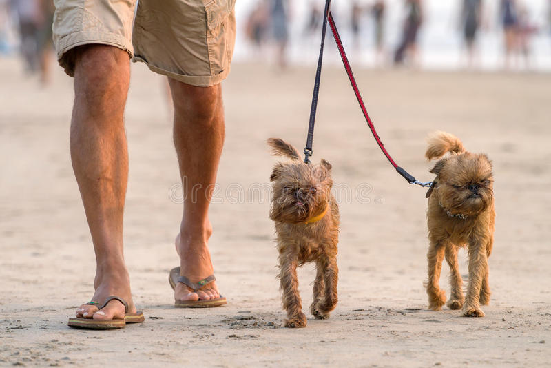 Άτομο που περπατά στην παραλία με δύο αστεία σκυλιά στοκ εικόνες