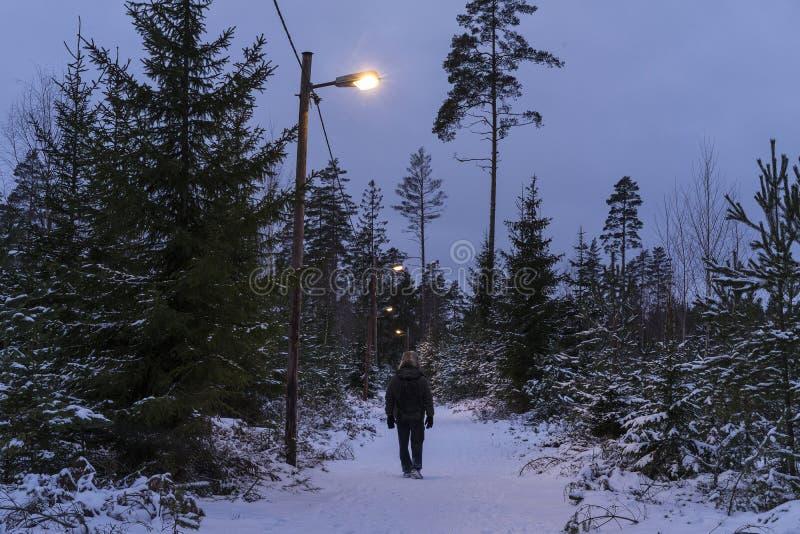 Άτομο που περπατά υπαίθρια στο χειμώνα στο σουηδικό δάσος στοκ εικόνες