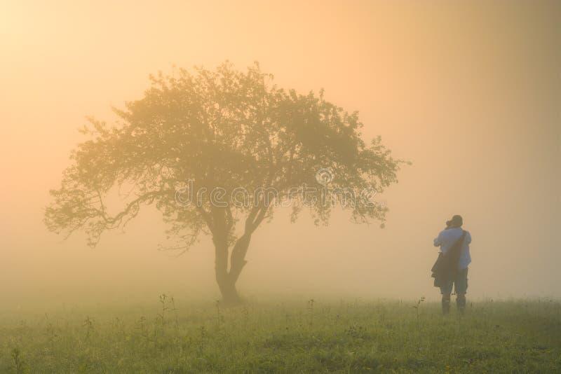 Άτομο που στέκεται σε έναν λόφο κάτω από το μεγάλο δέντρο στοκ φωτογραφία με δικαίωμα ελεύθερης χρήσης
