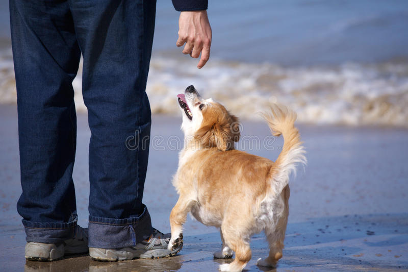 άτομο σκυλιών στοκ εικόνα