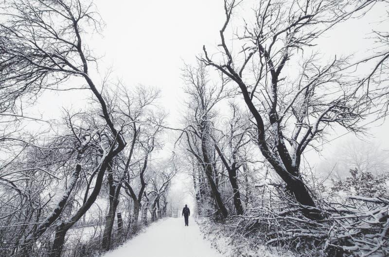 Άτομο στα δέντρα γουρνών χειμερινών δρόμων στοκ φωτογραφίες με δικαίωμα ελεύθερης χρήσης