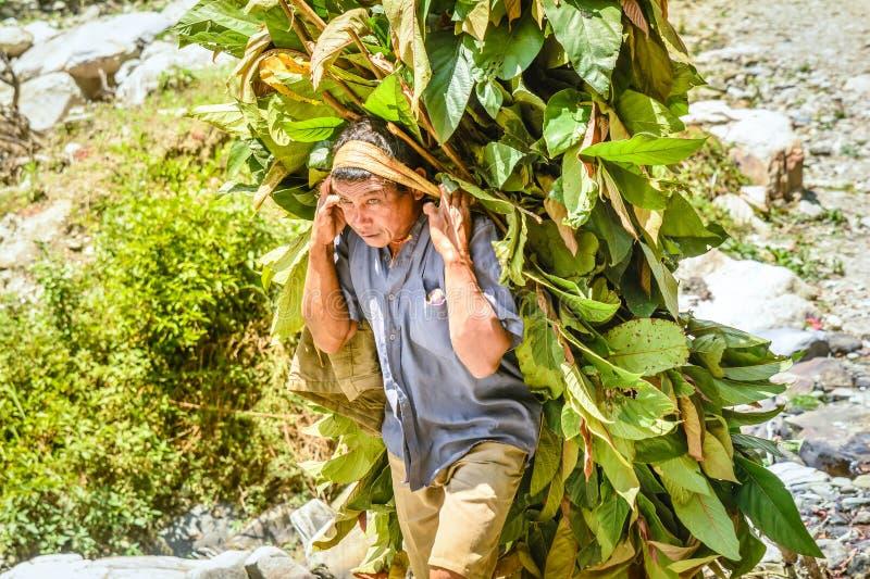Άτομο στα πράσινα μεταφοράς του Νεπάλ για τα κατοικίδια ζώα στοκ φωτογραφία με δικαίωμα ελεύθερης χρήσης