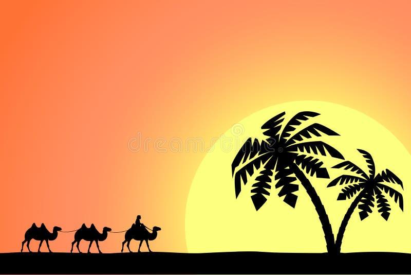 Άτομο στην καμήλα στους φοίνικες στο ηλιοβασίλεμα απεικόνιση αποθεμάτων