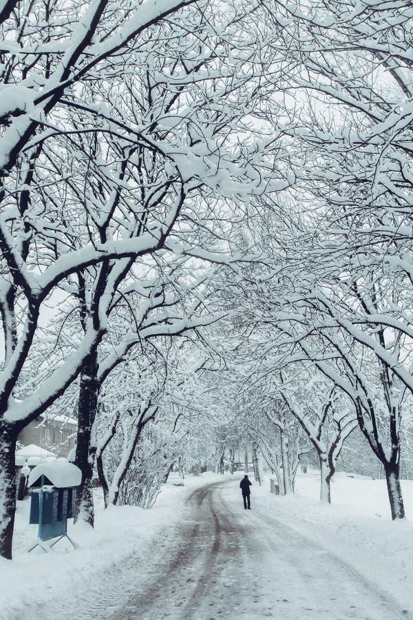 Άτομο στη χιονώδη χειμερινή αλέα στοκ εικόνες