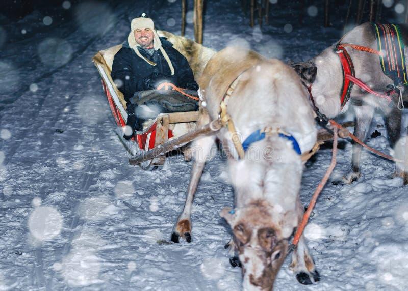 Άτομο στις δασικές χιονοπτώσεις του Ροβανιέμι σαφάρι ελκήθρων ταράνδων τη νύχτα στοκ φωτογραφίες με δικαίωμα ελεύθερης χρήσης